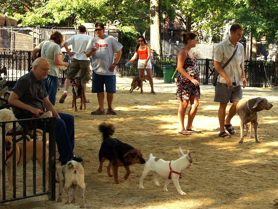 Are dog parks safe for your dog?