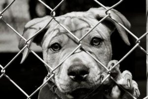 What does it mean to foster an animal?