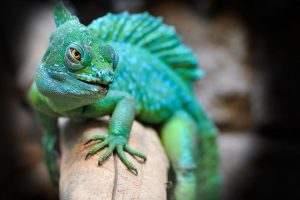 Why-exotic-animals-should-not-be-pets