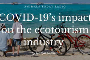 COVID-19's impact on the ecotourism industry
